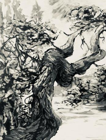 Garry Oak Study 1